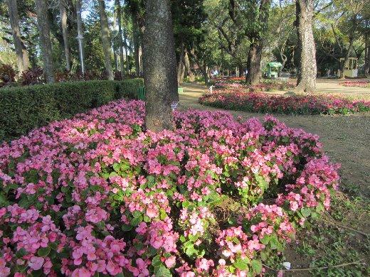 台南公園百花祭