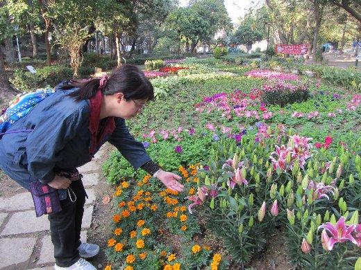 台南公園百花祭 百合花
