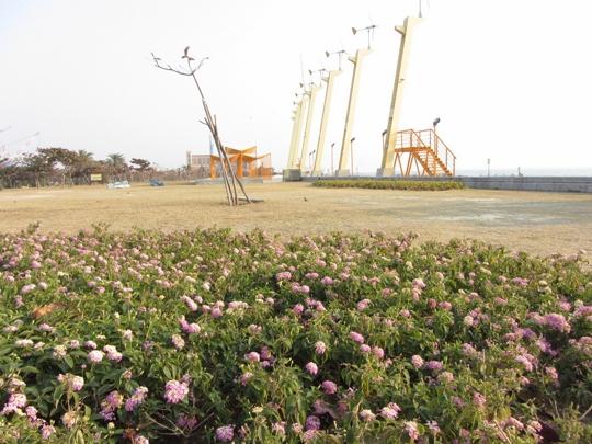 高雄旗津風車公園 花田、風車