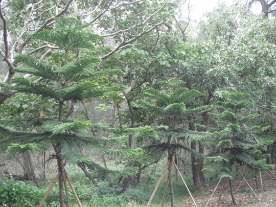 台東森林公園 樹屋