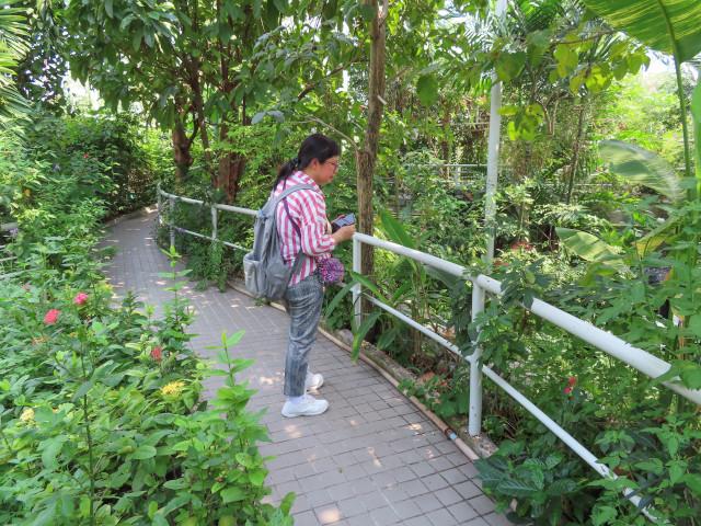 曼谷恰圖恰區 火車公園 蝴蝶博物館