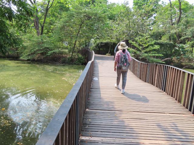 Bird Wave Bridge