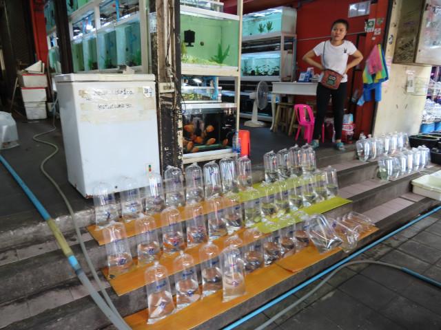 曼谷恰圖恰區 恰圖恰水族市場