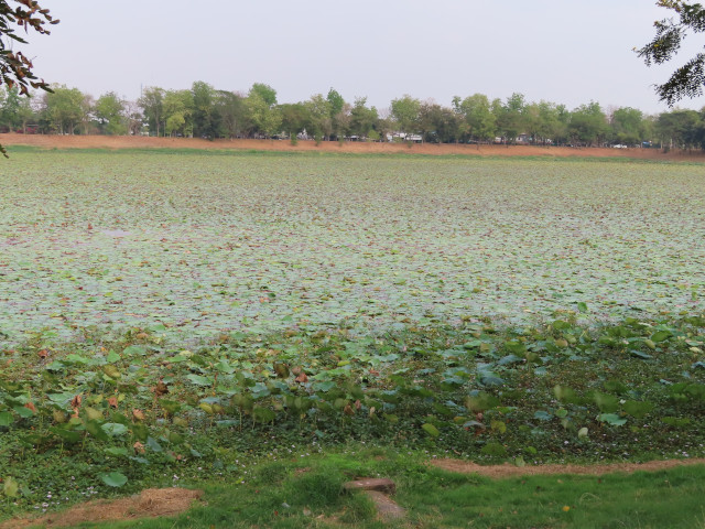 碧邁蓮花湖