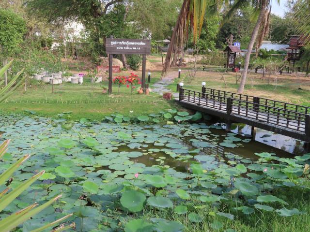 呵叻 Bung Ta Lua Water Park 蓮花湖