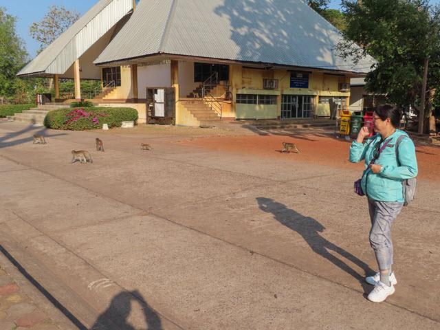 烏隆 Kumphawapi 猴子自然公園 (Monkey Nature Park)