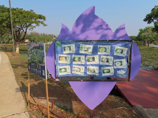 沙功那空 Sakon Nakhon 蓮花湖公園 (Chaloem Phrakiat Lotus Park) 蓮花品種