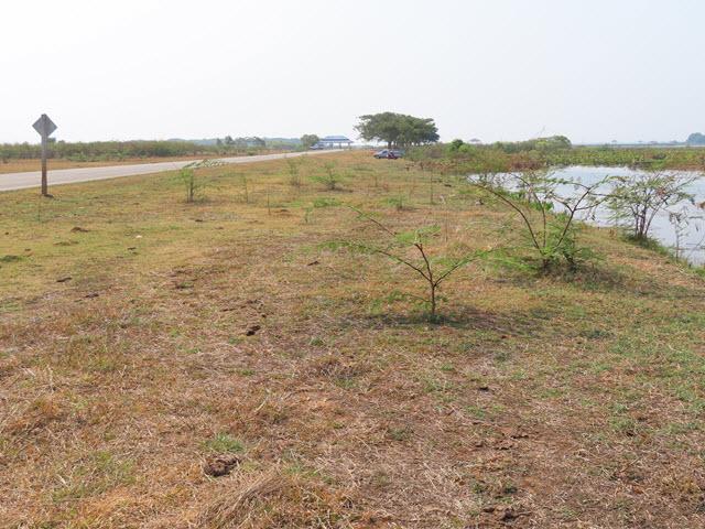 Sakon Nakhon Nong Han 湖生態公園