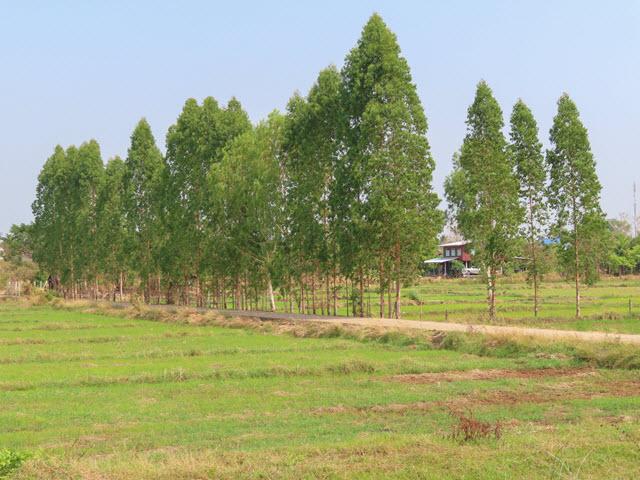 Sakon Nakhon Nong Han 湖畔村莊