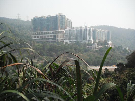 荃灣大帽山引水道眺望朗逸峰和寶雲匯